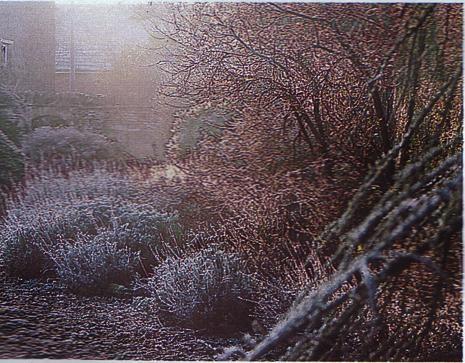 Artemisia gentileschi il giardino commento a leopardi - Il giardino dell artemisia ...